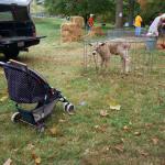 Lamb cage