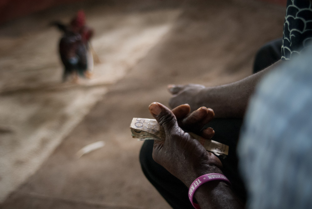 Cockfight betting