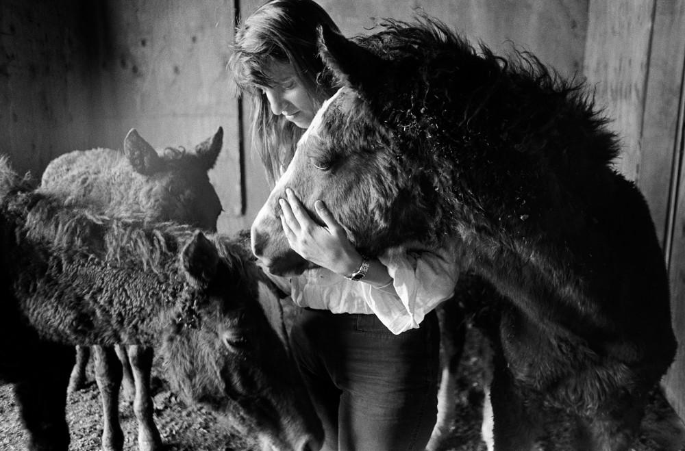 Petaluma horse girl