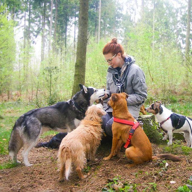 Tippe Tappe Pfötchen Hundebetreuung 1