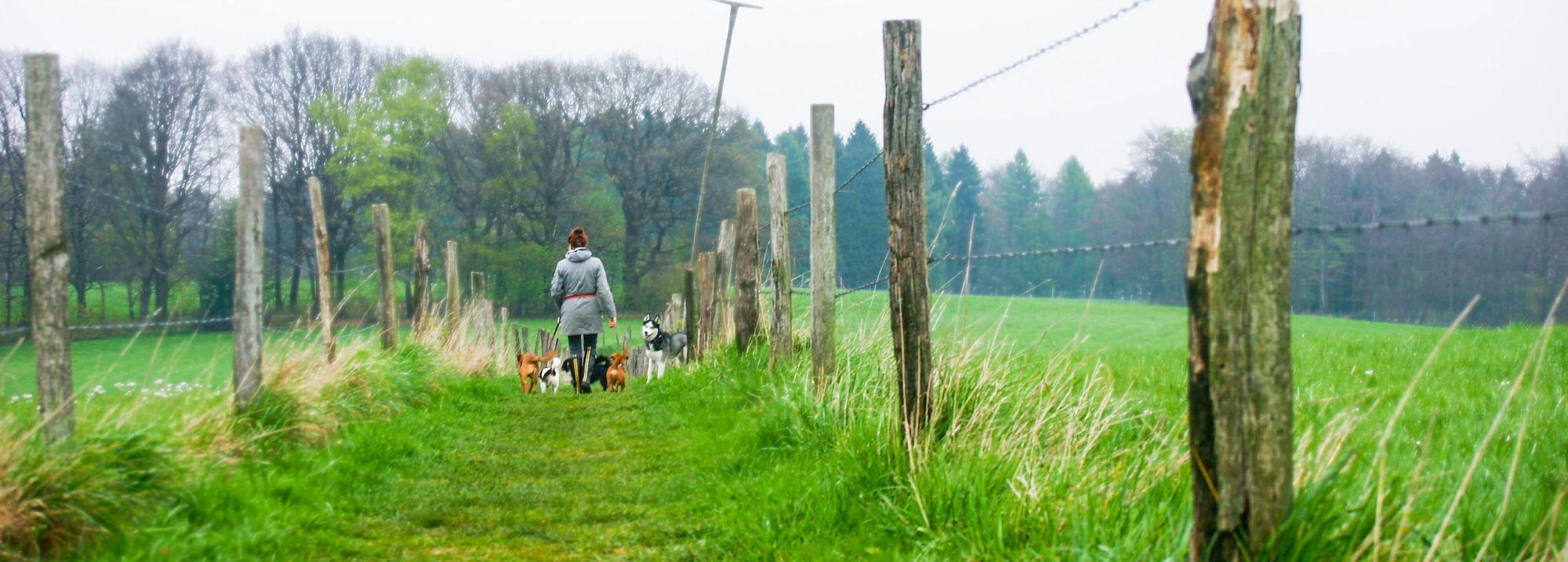 Tippe Tappe Pfötchen Hundebetreuung 2