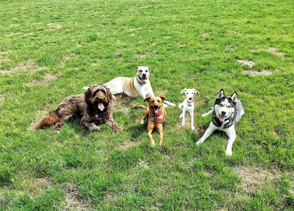 Tippe Tappe Pfötchen Hundebetreuung 3
