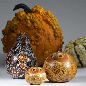Owl gourds for fall