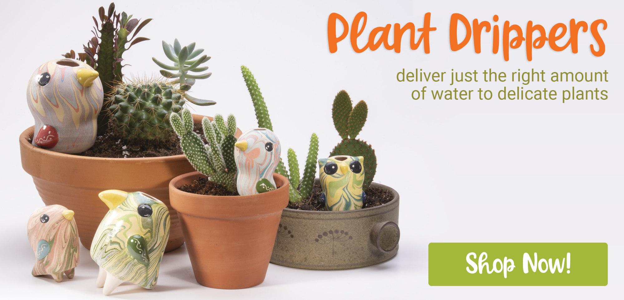 plant dripper birds