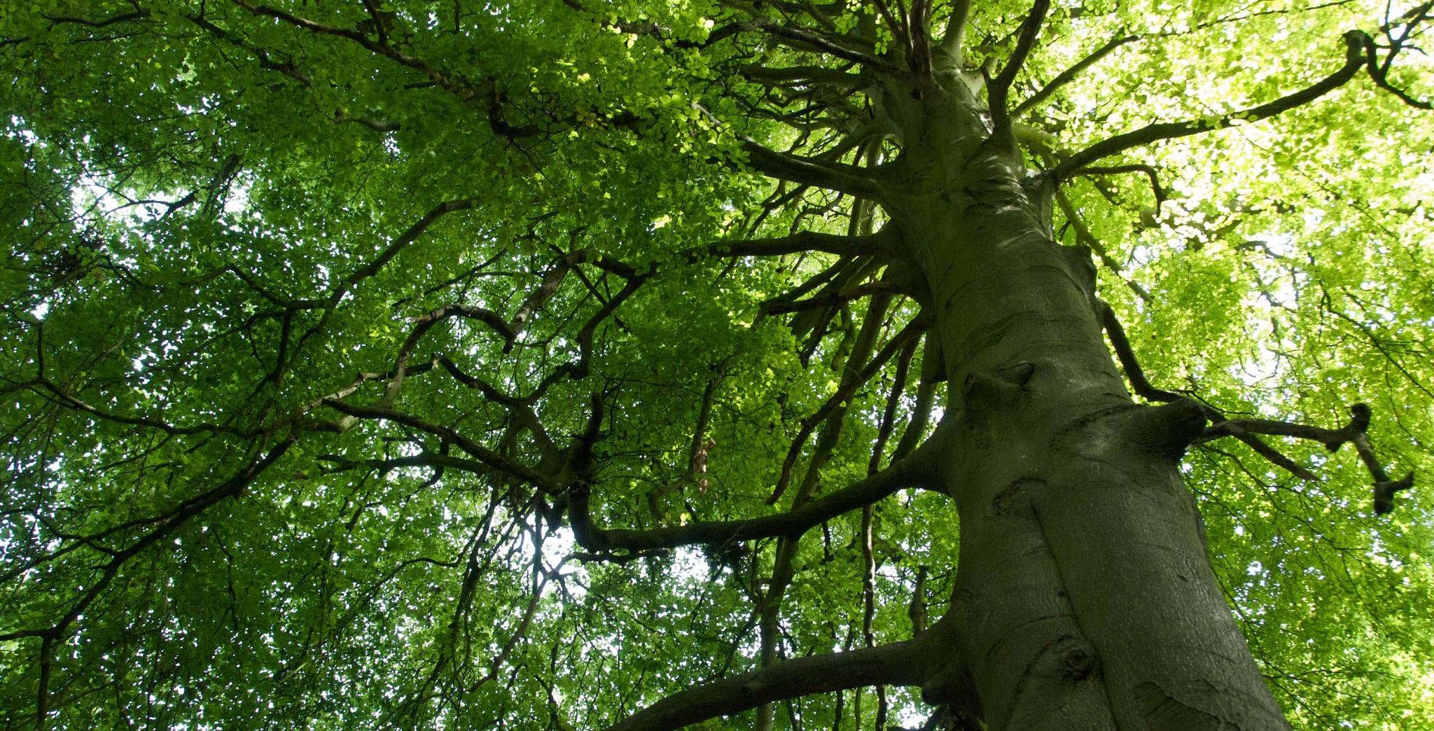 Trees Water People