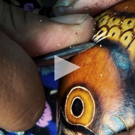 Owl Gourd video