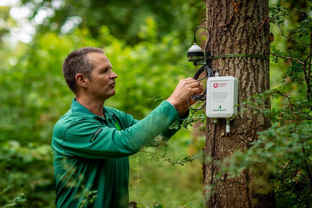 NB-IoT umožňuje například sledovat vliv klimatických změn na lesy ve Velké Británii