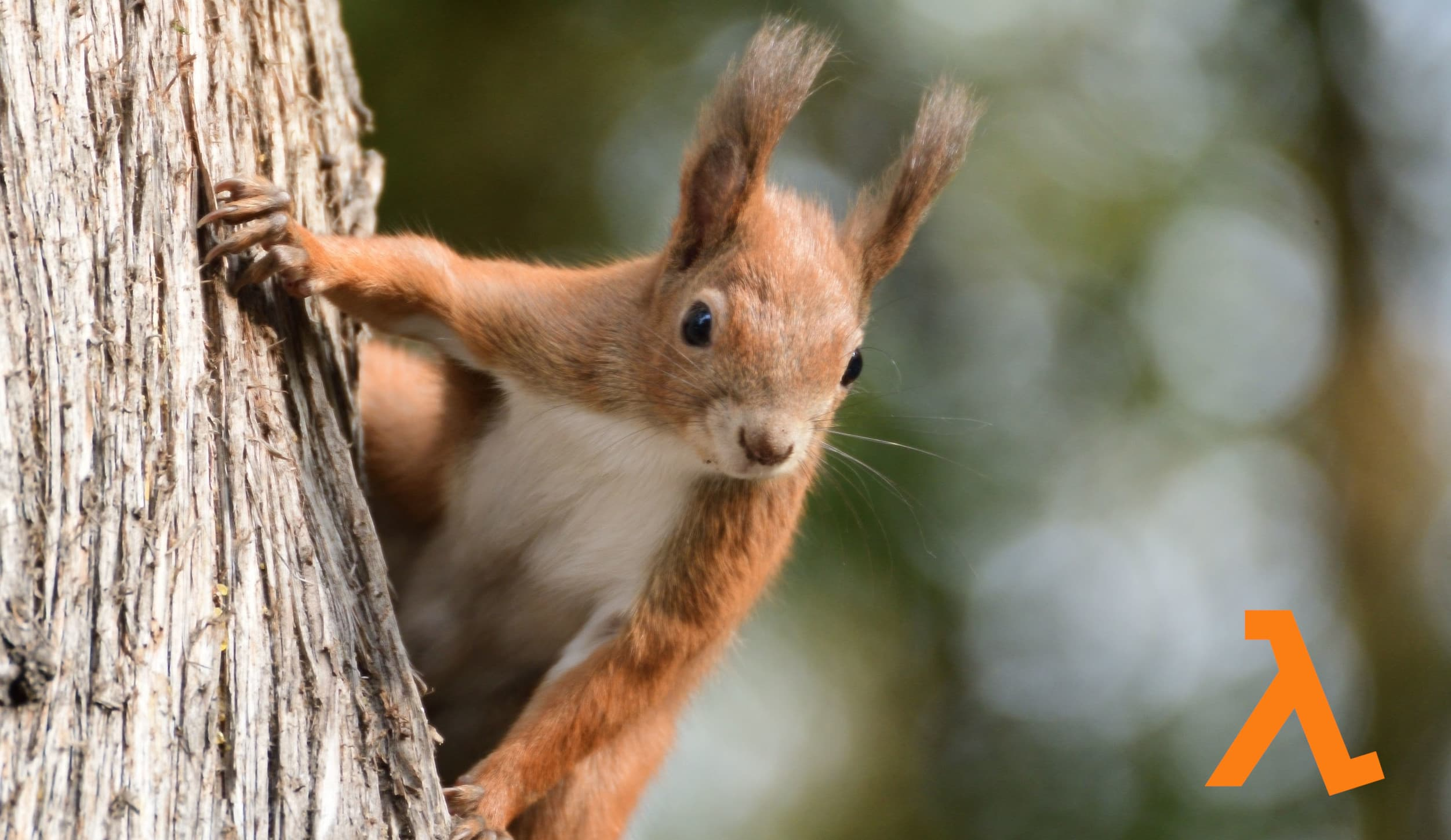 An image of a squirrel, representing the mascot of AWS SAM.