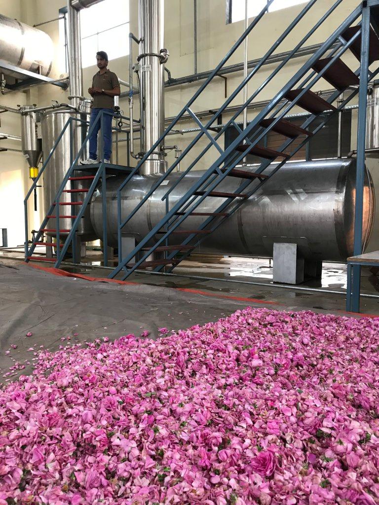 Regenerative rose absolute: a budding new venture in Pakistan
