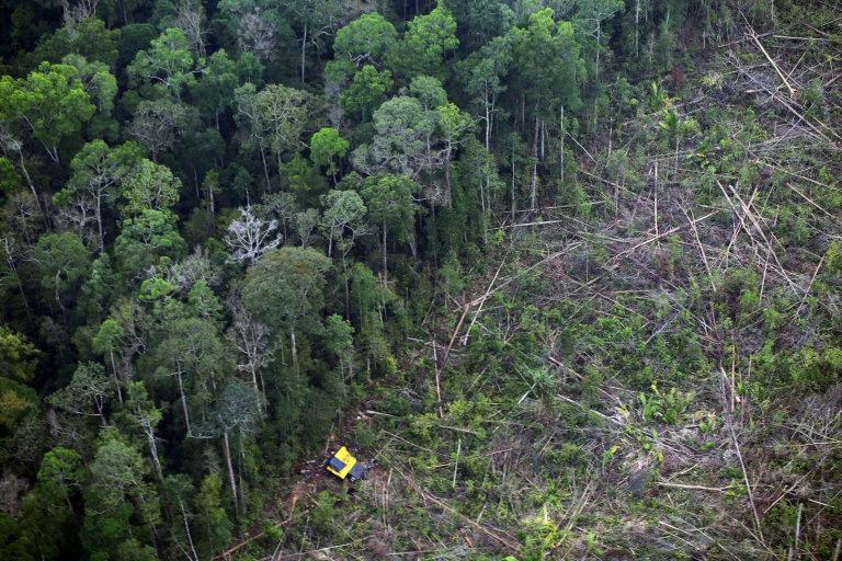 Sumatra reforestation