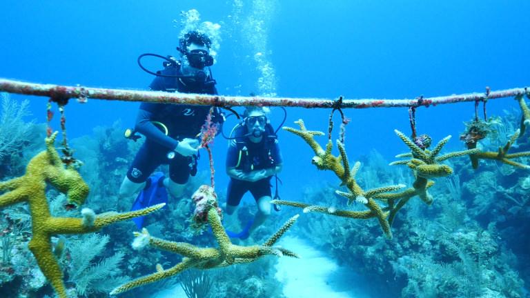By the Ocean We Unite coral nursery