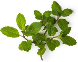 ingrédient lush - huile essentielle de menthe poivrée bio