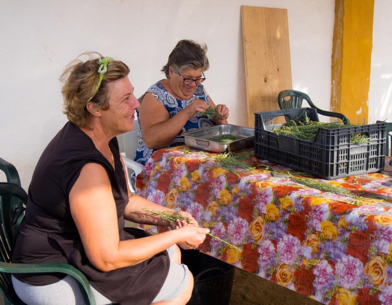 Isabel Ariza and a relative sorting Salicornia - Credit Julian Hoffman