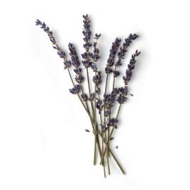 lavender-syrup