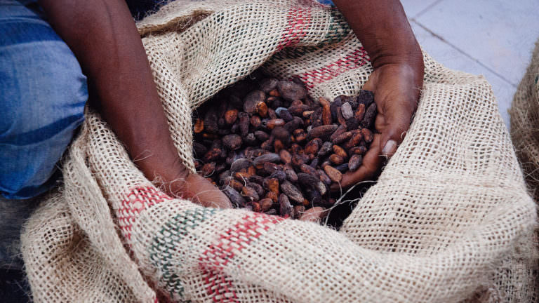 Ethical cocoa bean harvesting