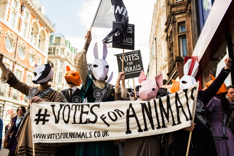 Votes For Animals