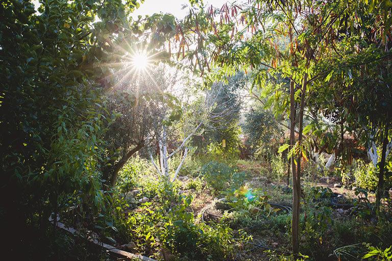Marda Permaculture Farm, Olive Tree Gourmet soap