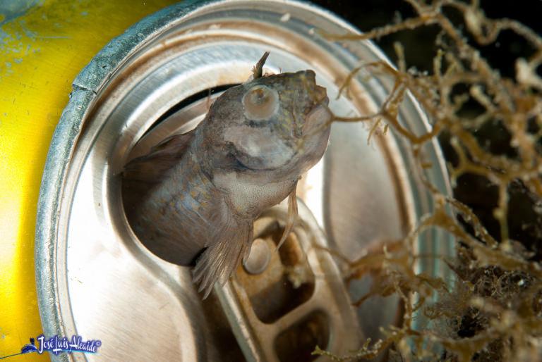 Un pez se asoma a una lata de refresco en el fondo del mar.