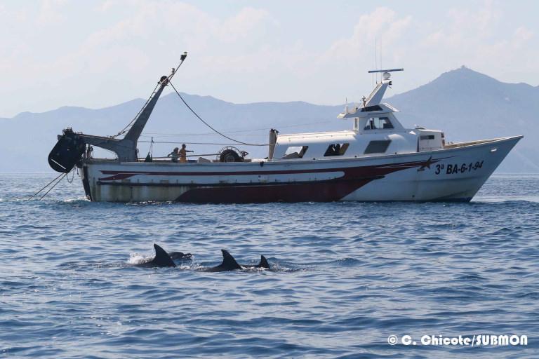 Un grupo de delfines enfrente de un barco pesquero