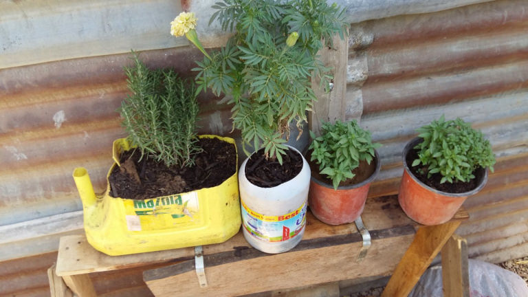 SOILS plant containers
