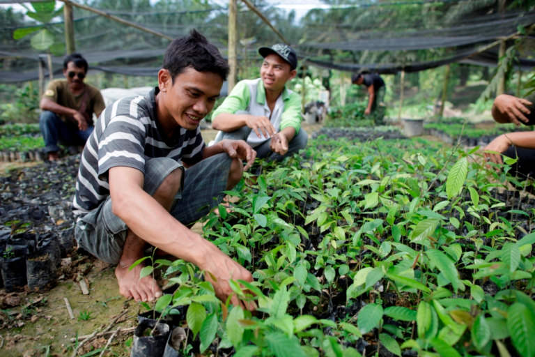 Tree nursery at sustainable agriculture demonstration site in Sumatra