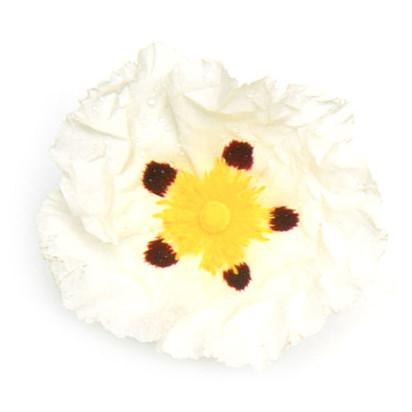 Labdanumharz