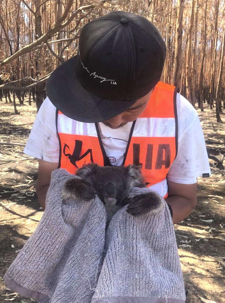 LUSH ラッシュ チャリティポット クリーム 寄付 助成 チャリティ 社会貢献 オーストラリア 森林火災 コアラ 緊急