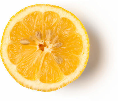 Fetta di Limone Siciliano (Citrus limonum)