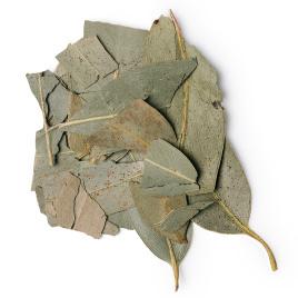 Dried eucalyptus leaves