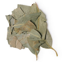 Dried eucalyptus leaves