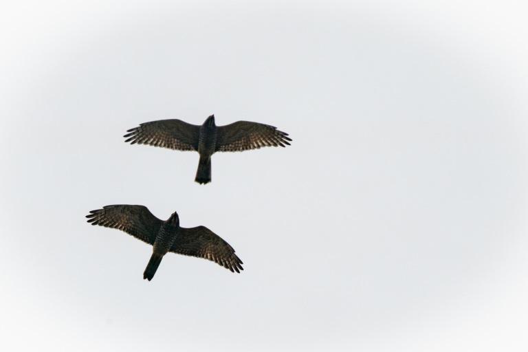 LUSH ラッシュ リジェネレイティブ  里山再生 サシバ 渡り鳥 スキンケア サステナビリティ リジェネラティブ オーガニック SDGs 里山 有機農業 山都町