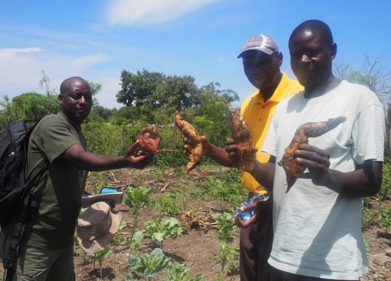Permaculture in action