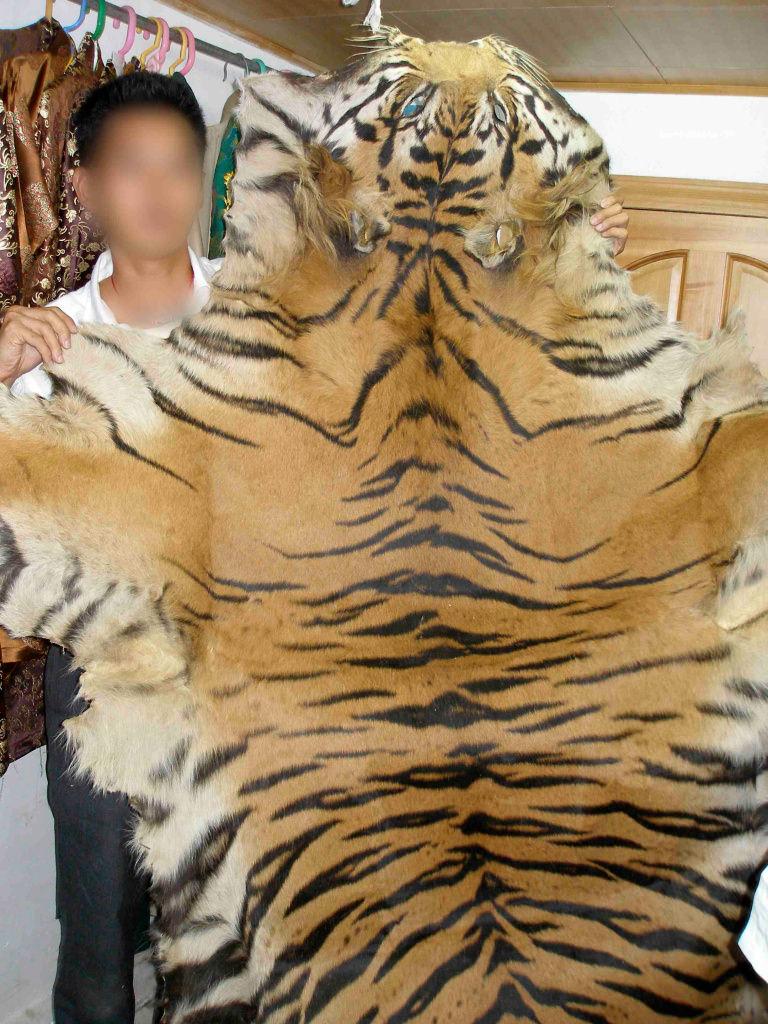 Tiger skin - Environmental Investigation Agency