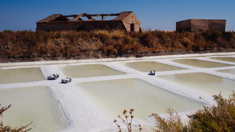 proteger e sustentar os sapais do Oeste Algarvio