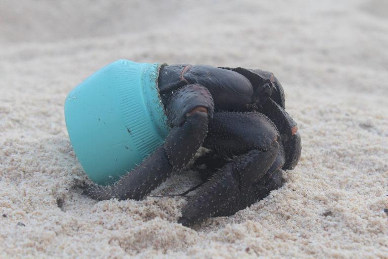 Crab in plastic pot on Henderson Island - photographer Jennifer Lavers