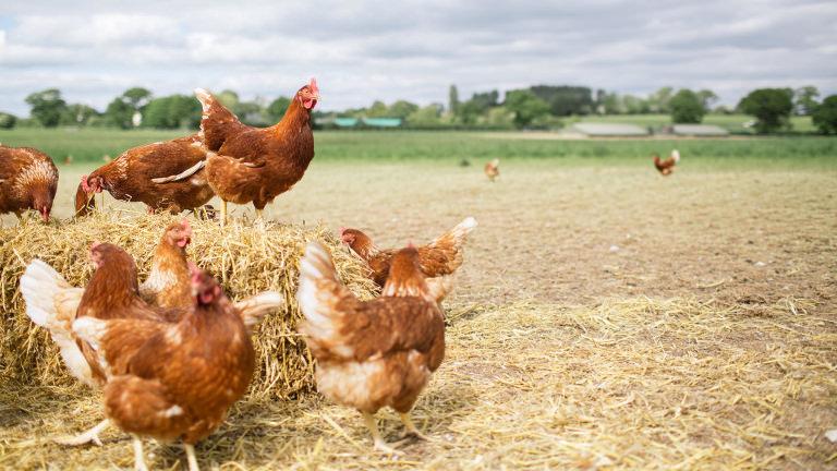 Veganer väljer att utesluta alla animaliska produkter ur sitt liv