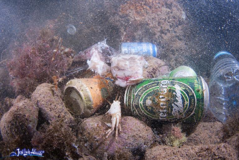 El número de caballitos de mar en el Mar Menor se ha reducido en un 97% en 11 años