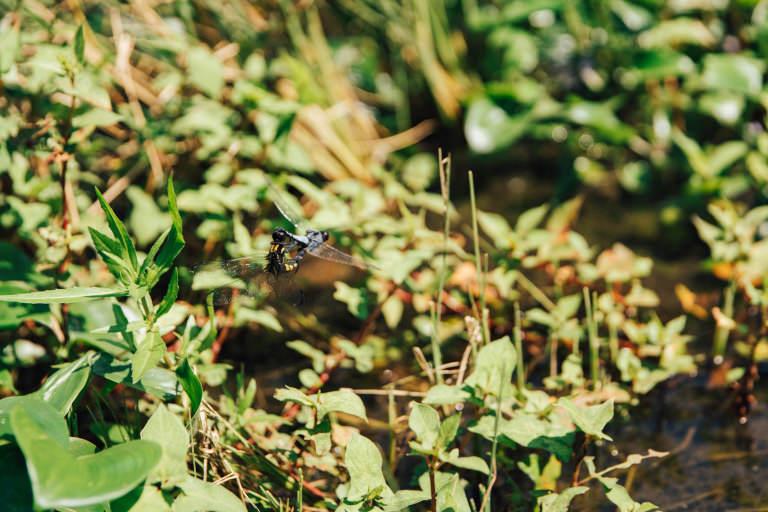 ラッシュ LUSH 渡り鳥 サシバ 三浦半島 生物多様性 天白牧夫 復田 再生 谷戸 SYOKU-YABO