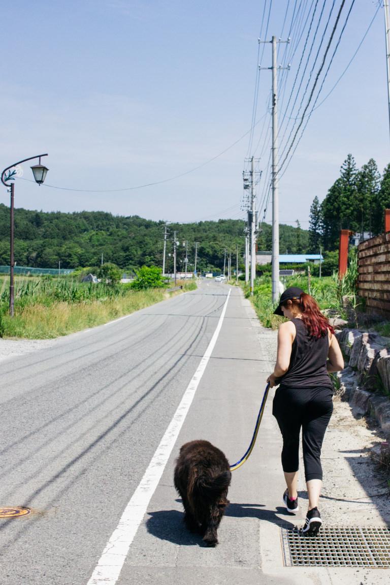 清川しっぽ村 飯舘村 散歩ボランティア