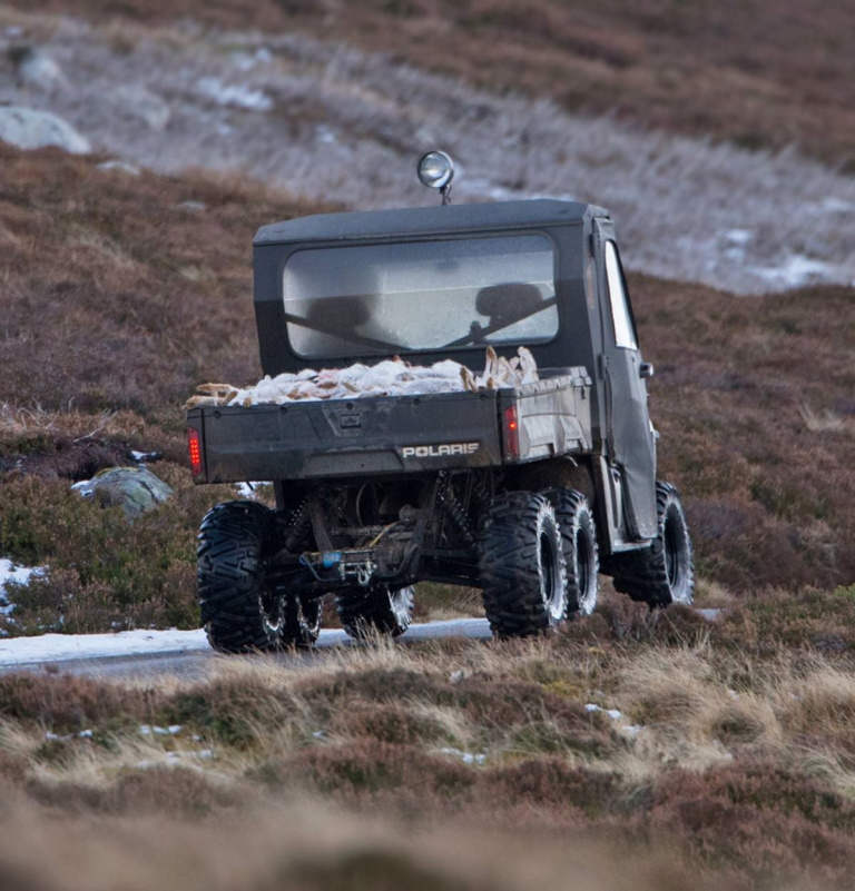 Mountain hares on the back of a truck - Peter Walkden