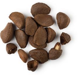Huile de noix du Brésil - ingrédient lush