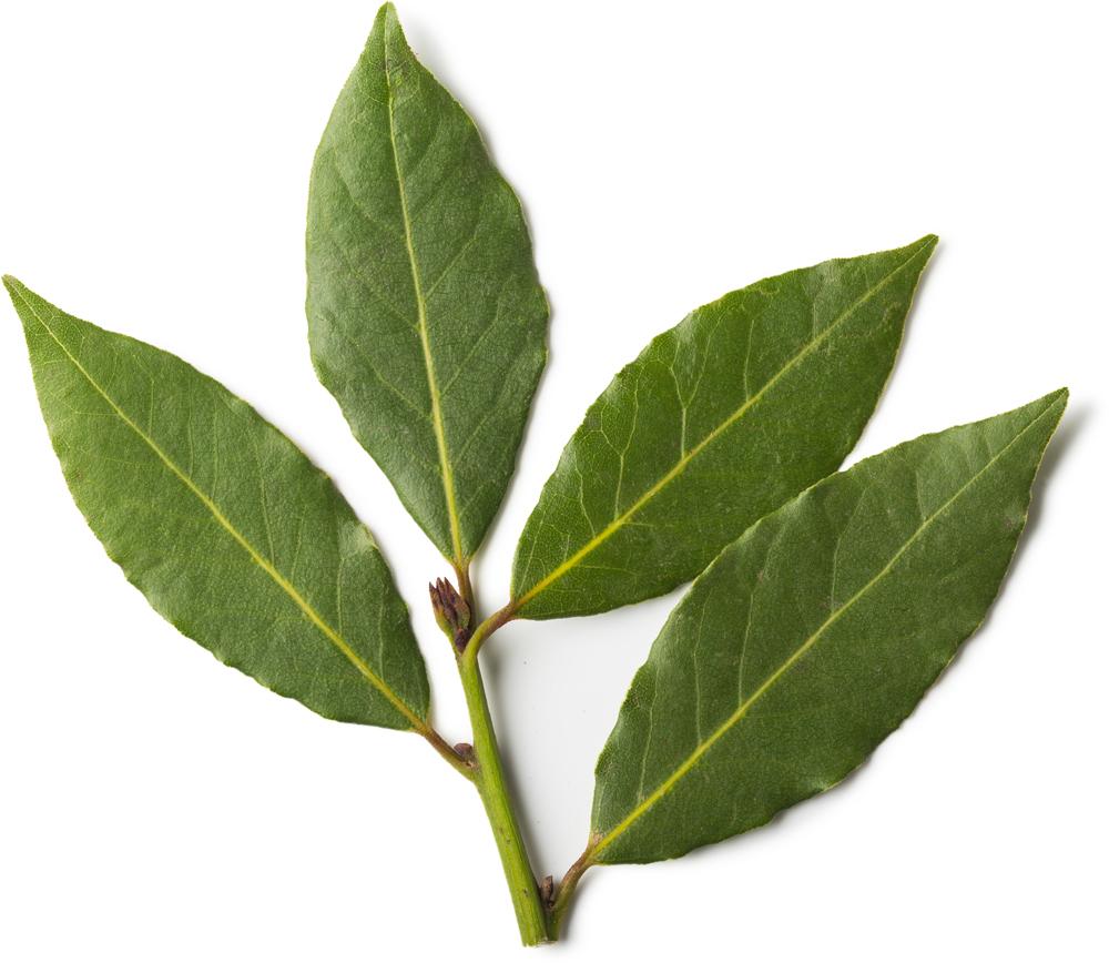Fresh Bay Leaf Infusion Lush Fresh Handmade Cosmetics Uk