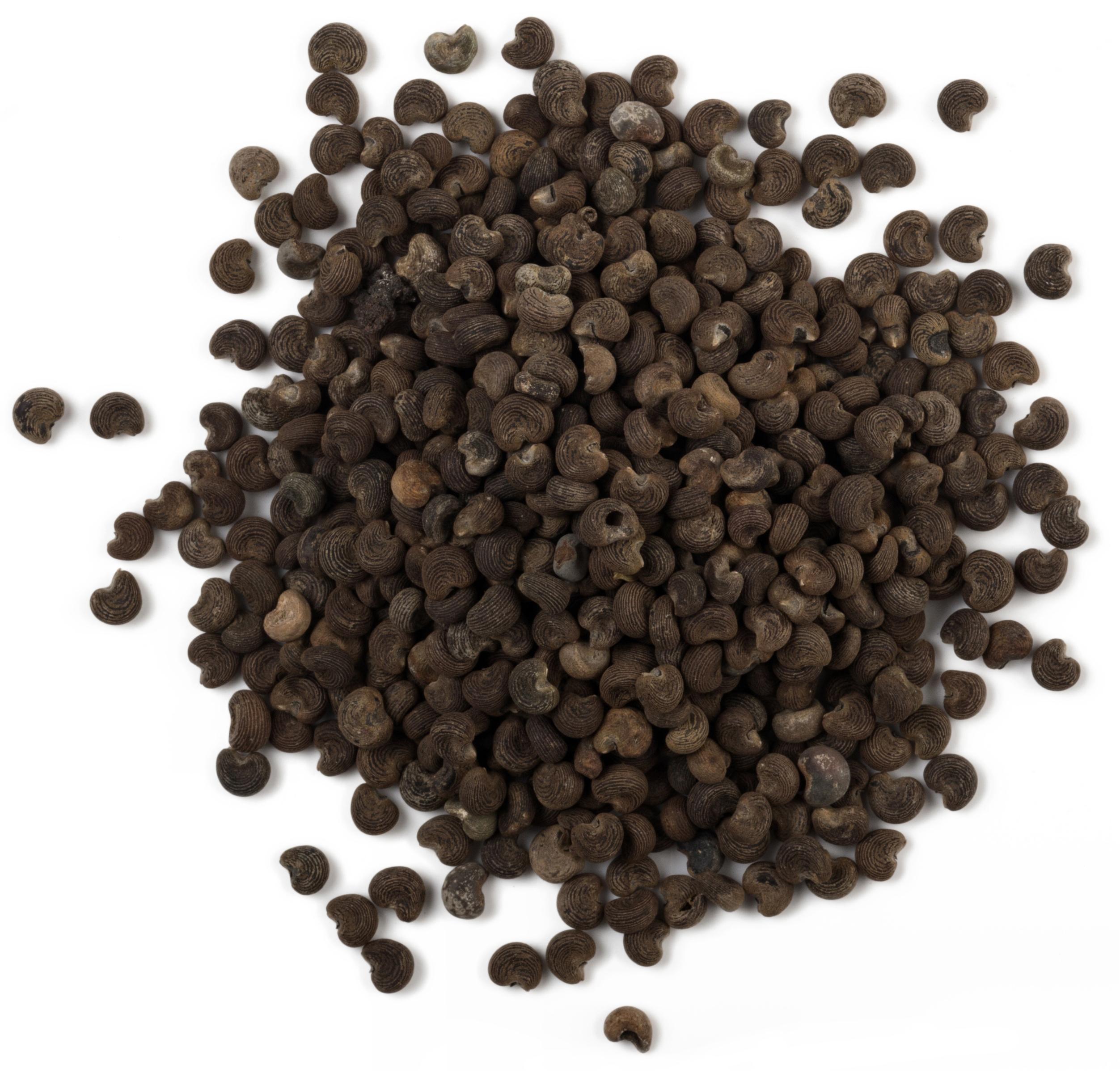 トロロアオイモドキ種子エキス