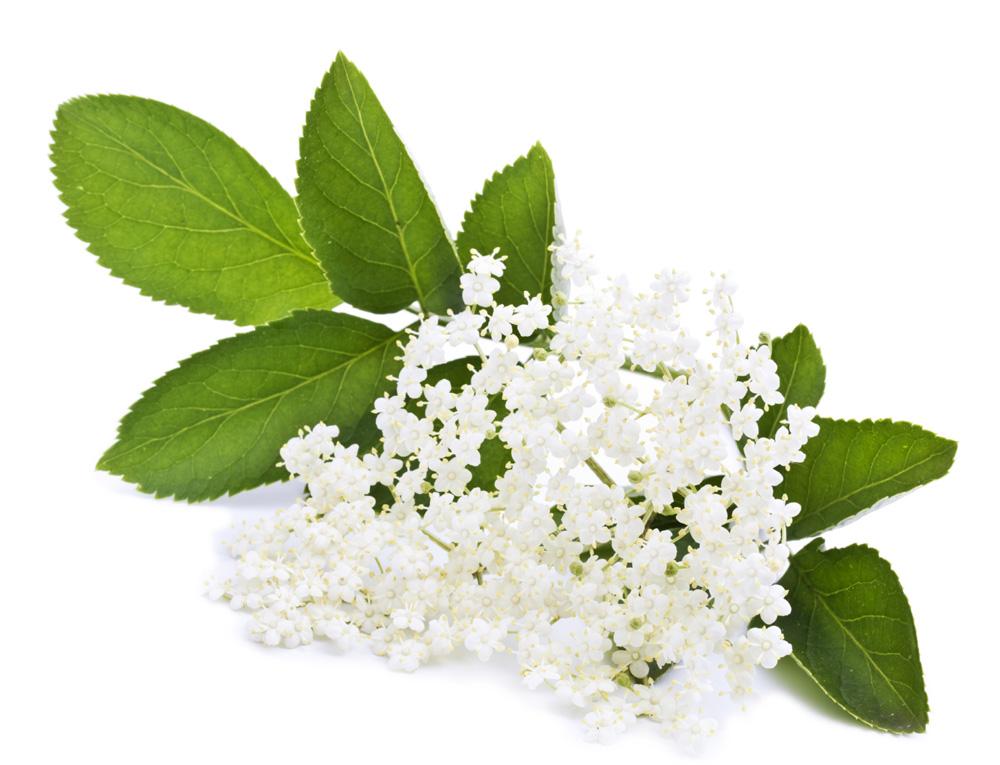 Elderflower Infusion Lush Fresh Handmade Cosmetics