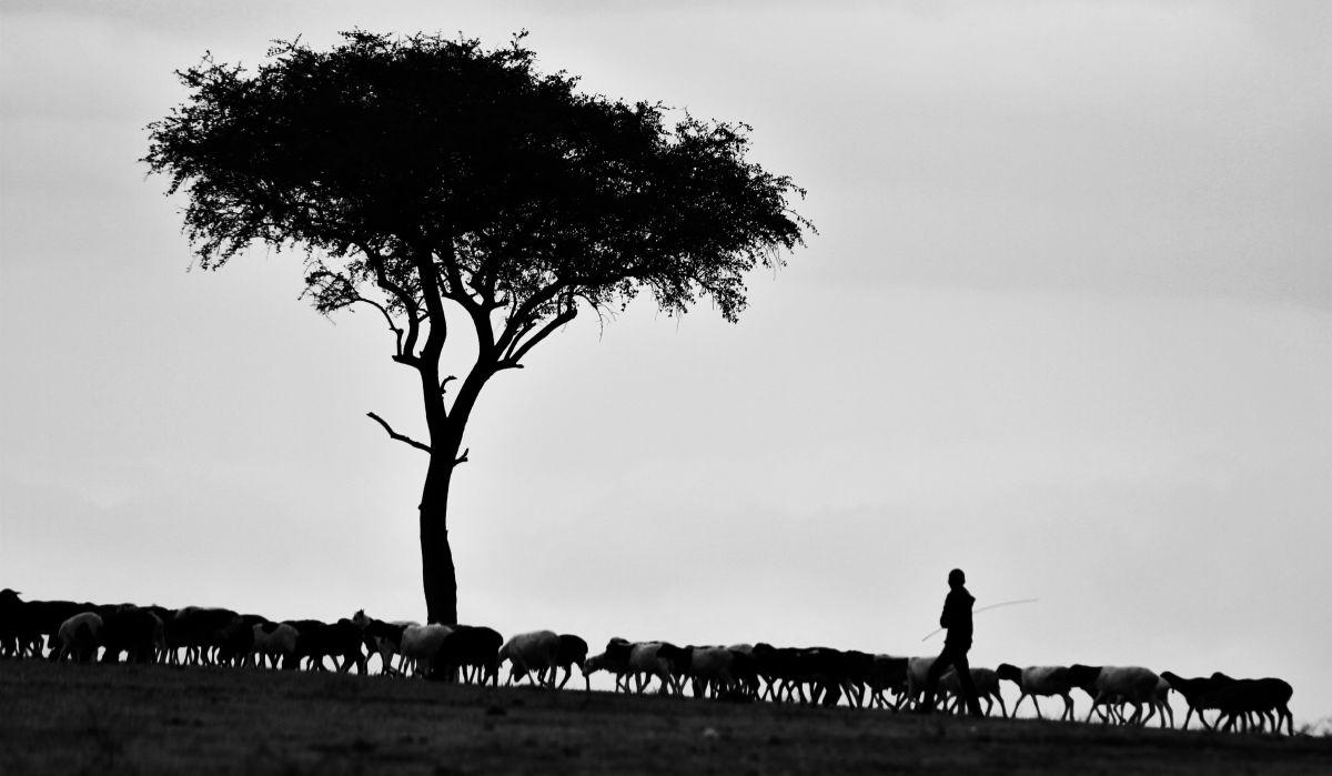The Little Shepherd   Lutalica