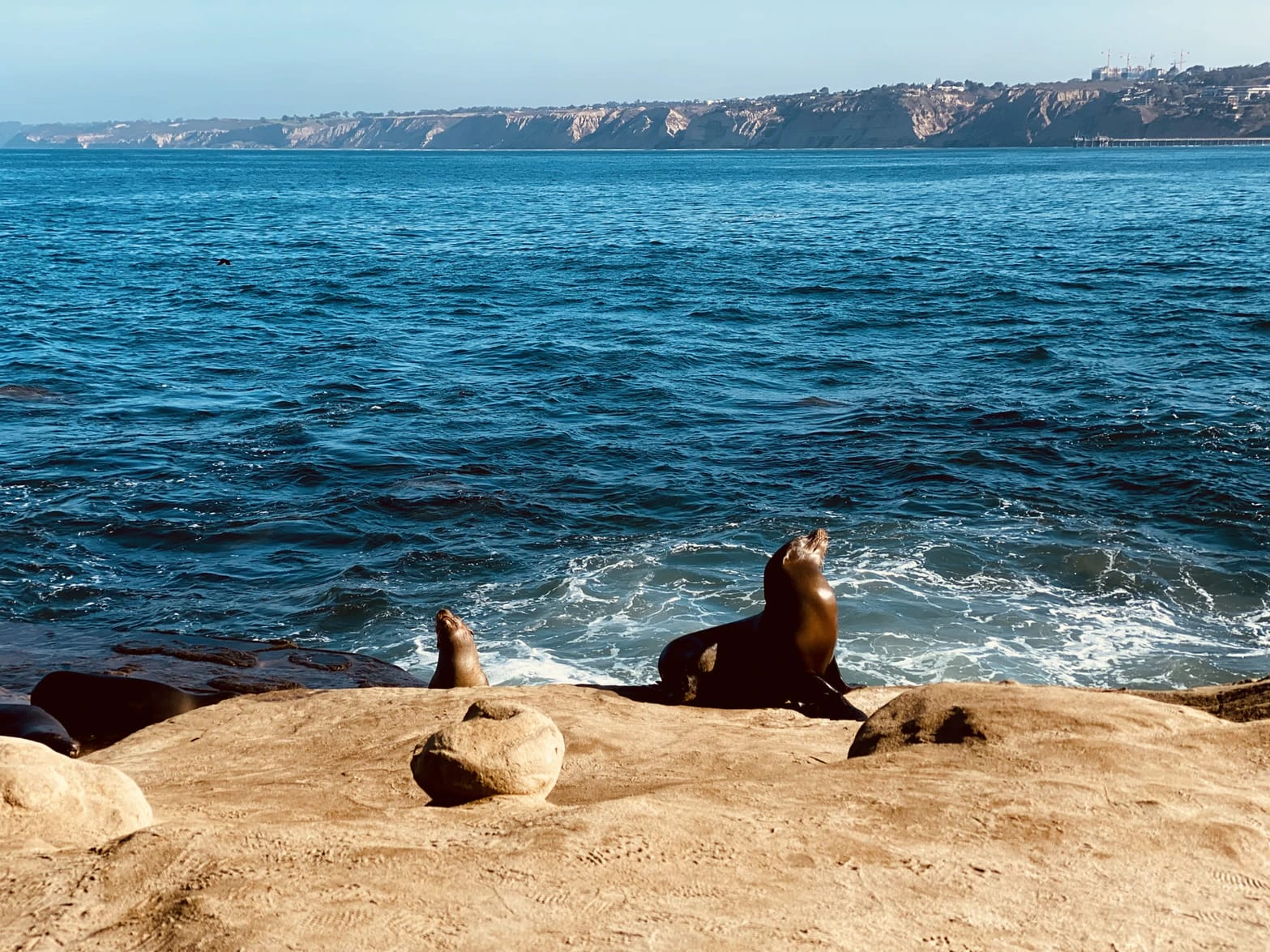 4 Best North County San Diego Beaches to Visit This Winter