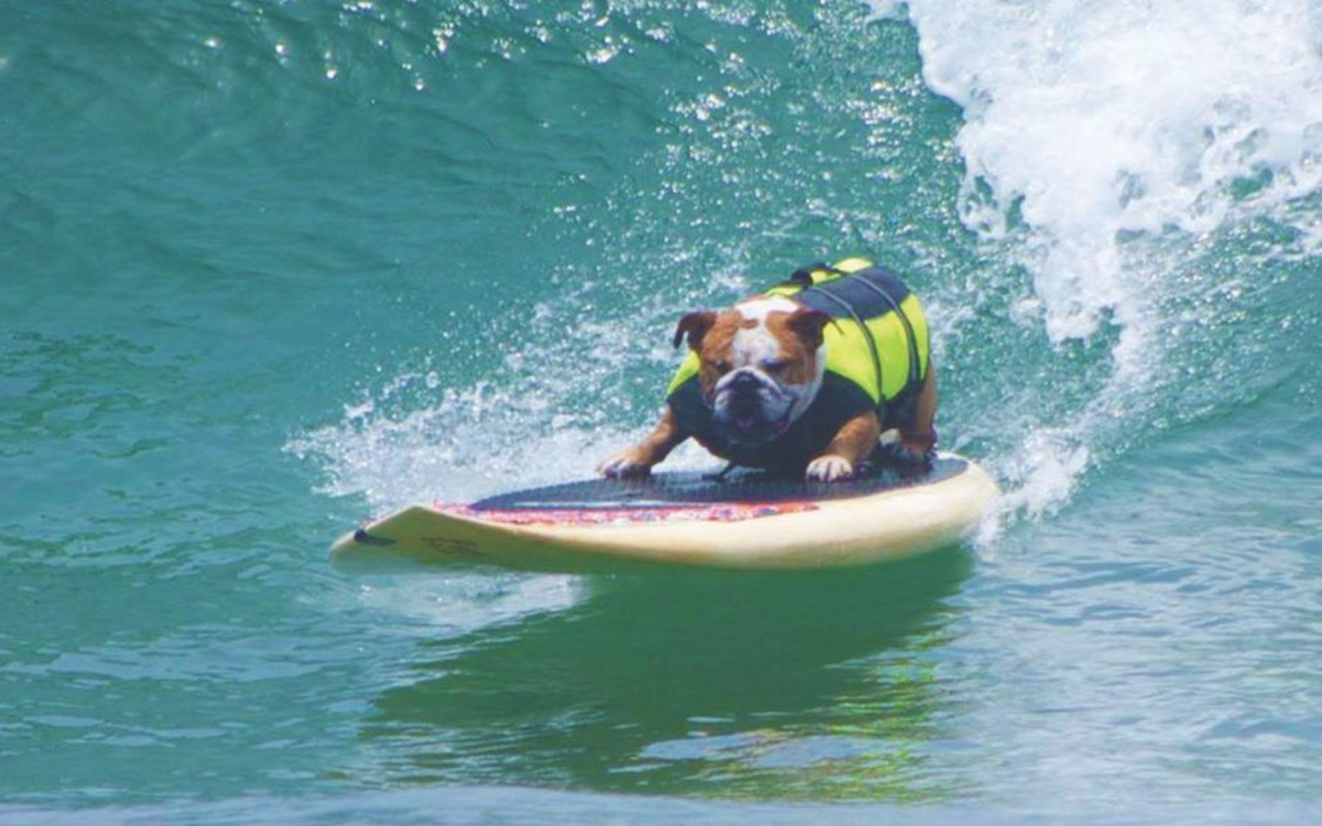 Los Perros Surfistas