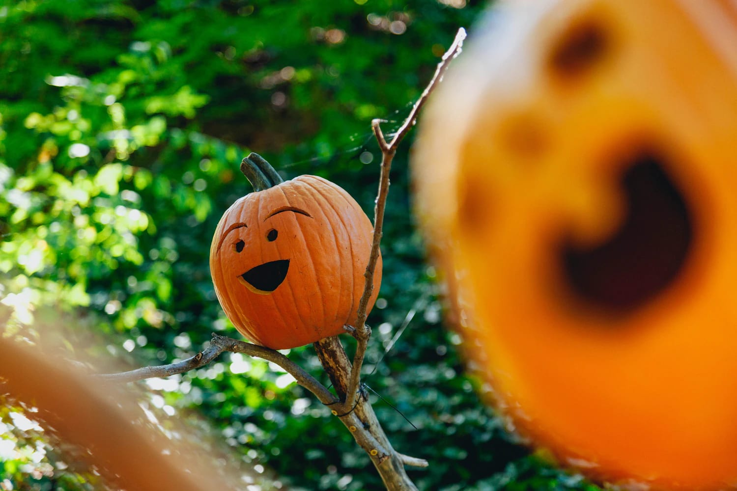 4 Family-Friendly Halloween Activities in North County San Diego