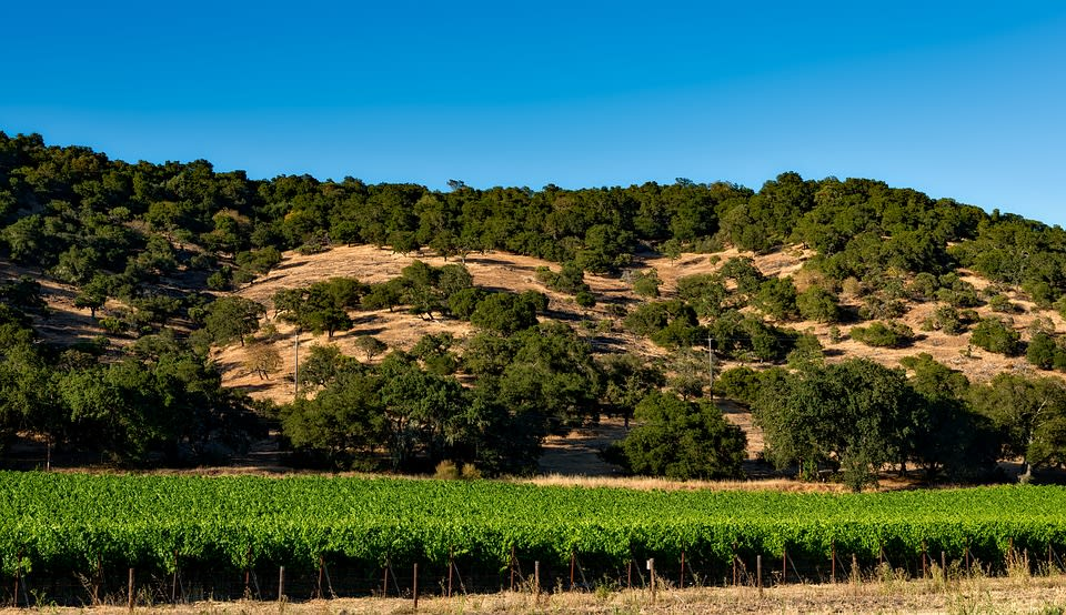 4 Historical Facts You Might Not Know About Napa