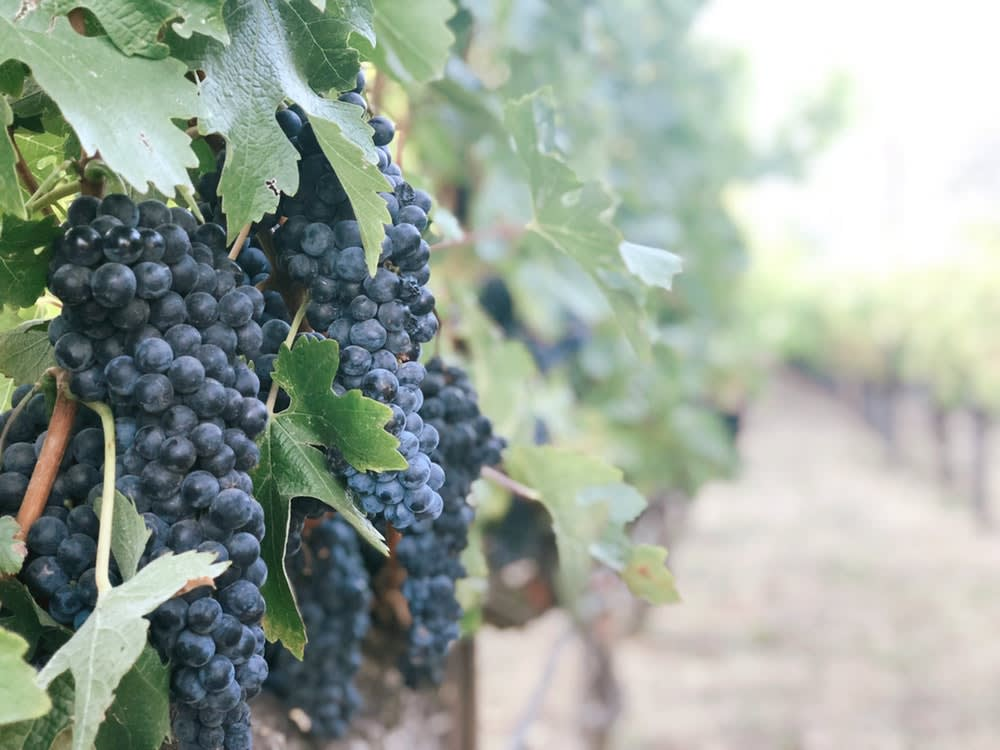 The New Generation of French Winemakers Coming to Napa